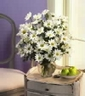 Bouquet of 21 stems of Beautiful White Daisies